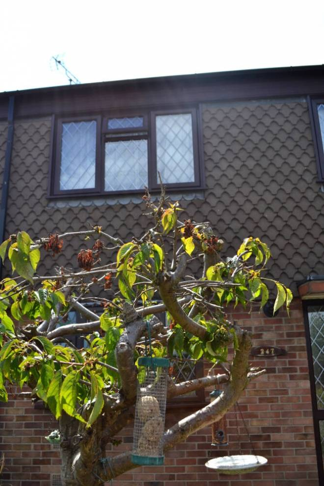 upvc windows Kent 18 thegem gallery masonry - Casement Windows