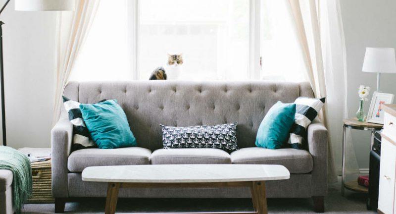 cat-sitting-on-window-ledge-in-beautiful-lounge-with-grey-sofa