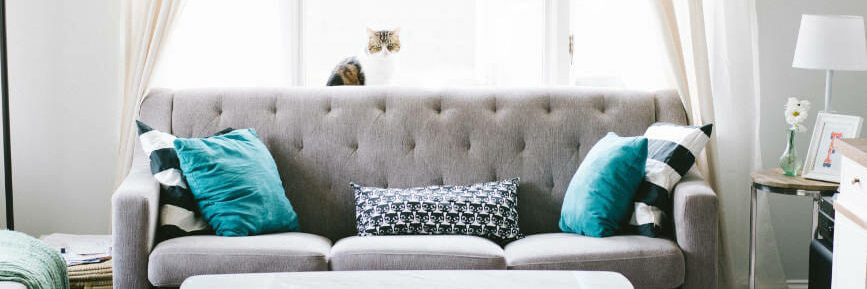 cat-sitting-on-window-ledge-in-beautiful-lounge-with-grey-sofa